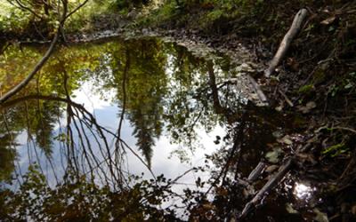 Les MRC de l'Estrie et la Ville de Sherbrooke collaborent pour la conservation des milieux humides et hydriques