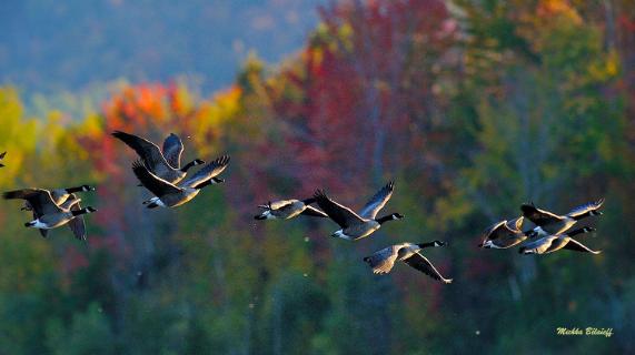 Retour du Festival des Oiseaux migrateurs