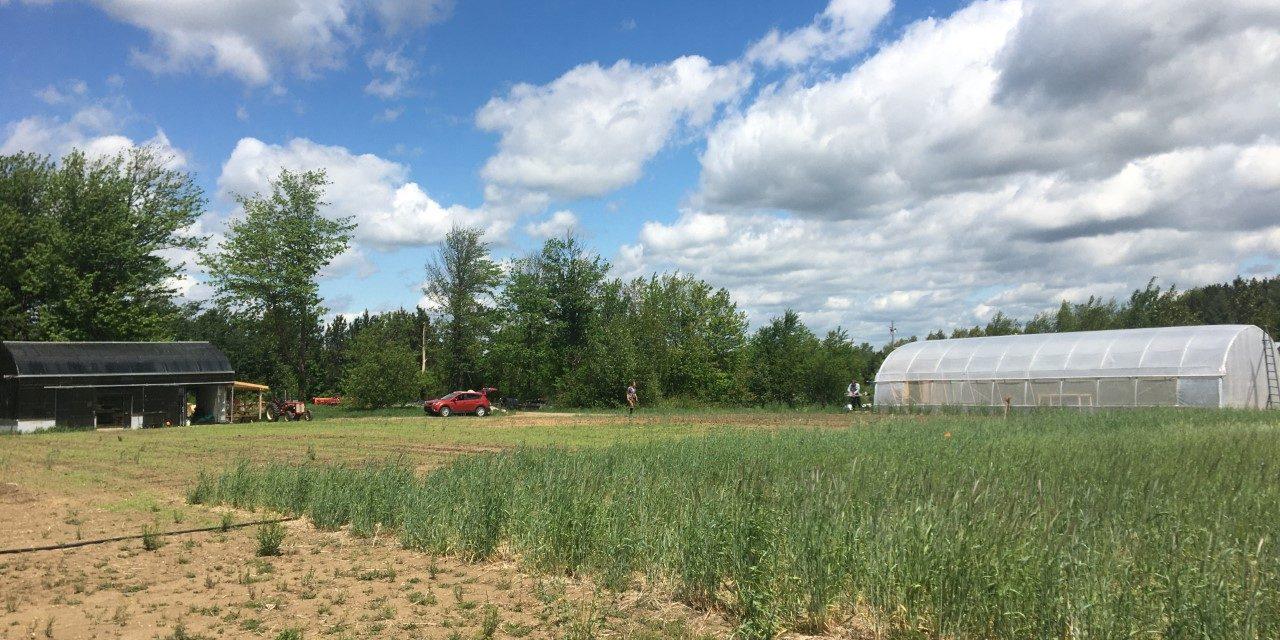 Plus de 714 000 $ pour des projets de recherche au Centre d'innovation en agriculture du Cégep de Victoriaville
